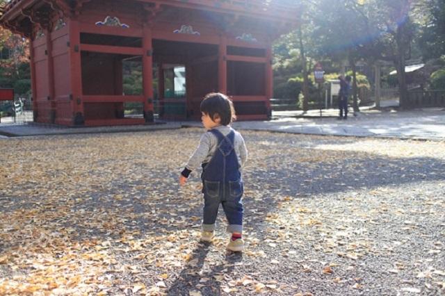 つつじまつりが有名な根津神社ですが、普段の静かなお日さまが優しく照らす雰囲気も素敵な場所