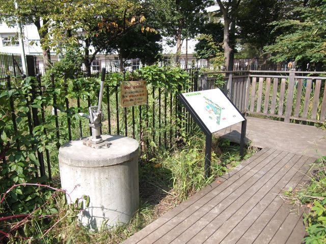 精華公園のビオトープ